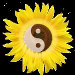 +R_2012-07-10_Logo_auf_transparent